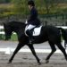 Black Curly Dressage Champion