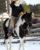 *BCF Icon – Sporthorse Stallion at stud