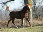 2015 foals - action 01