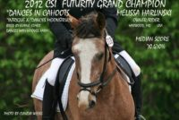 10 year old gelding for eventing