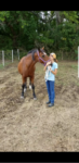 Violet, a Sweet Mature Mare
